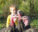 Tide Mill Farm Turkeys