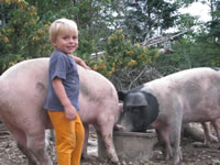 Picture of Tide Mill Organic Pork