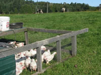 Picture of Tide Mill Organic Chickens
